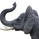 Słoń trąba do góry